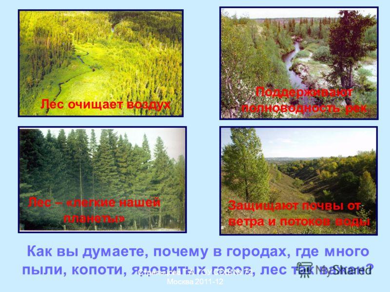 Как вы думаете, почему в городах, где много пыли, копоти, ядовитых газов, лес так важен? Лес – «легкие нашей планеты» Лес очищает воздух Поддерживают полноводность рек Защищают почвы от ветра и потоков воды Стрельцова Т.А. ГОУ СОШ 72 Москва 2011-12