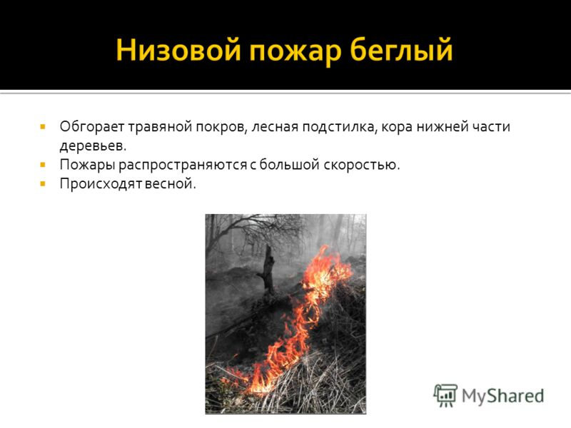 Обгорает травяной покров, лесная подстилка, кора нижней части деревьев. Пожары распространяются с большой скоростью. Происходят весной.