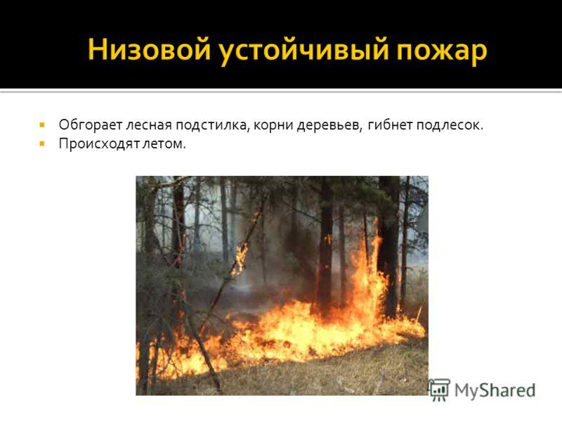 Обгорает лесная подстилка, корни деревьев, гибнет подлесок. Происходят летом.