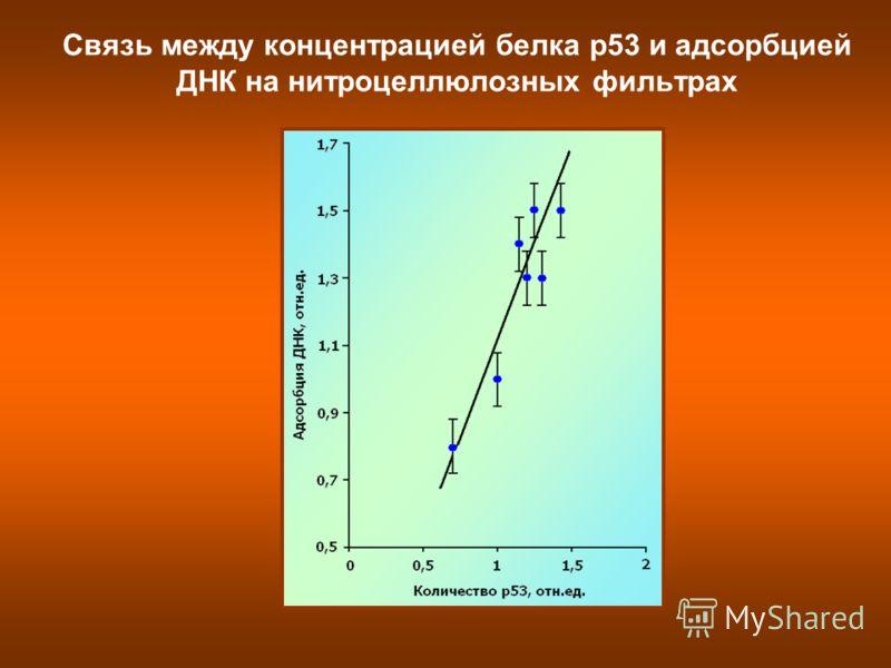 Связь между концентрацией белка р53 и адсорбцией ДНК на нитроцеллюлозных фильтрах
