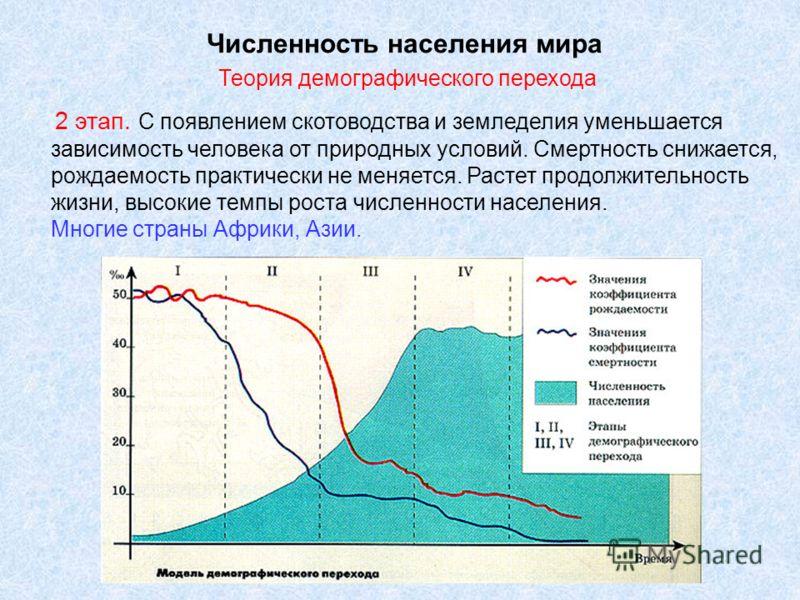 Численность населения мира Теория демографического перехода 2 этап. С появлением скотоводства и земледелия уменьшается зависимость человека от природных условий. Смертность снижается, рождаемость практически не меняется. Растет продолжительность жизн