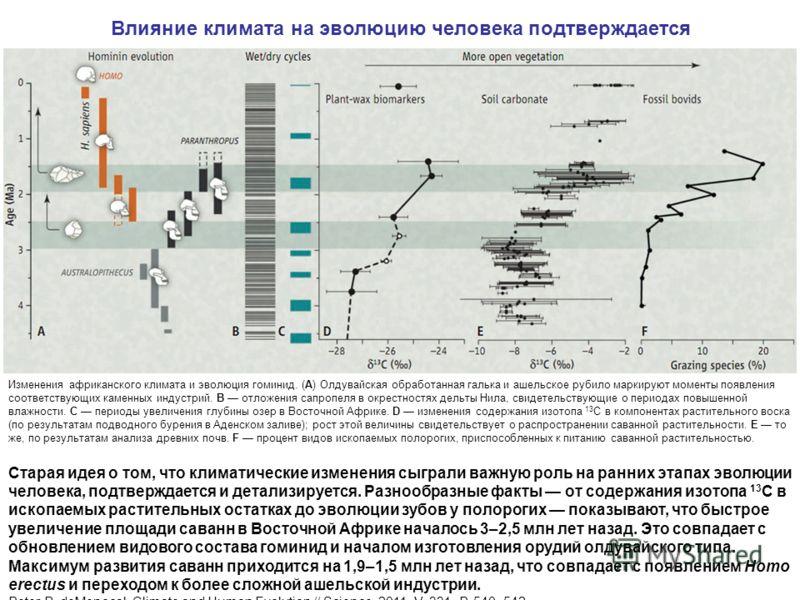 Влияние климата на эволюцию человека подтверждается Изменения африканского климата и эволюция гоминид. (A) Олдувайская обработанная галька и ашельское рубило маркируют моменты появления соответствующих каменных индустрий. B отложения сапропеля в окре