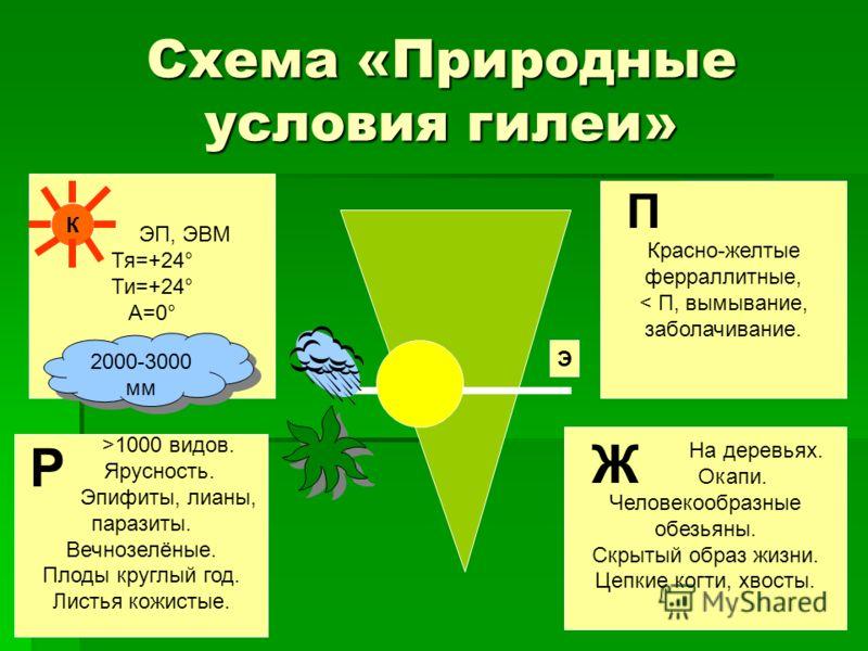 >1000 видов. Ярусность. Эпифиты, лианы, паразиты. Вечнозелёные. Плоды круглый год. Листья кожистые. Р Красно-желтые ферраллитные, < П, вымывание, заболачивание. П Схема «Природные условия гилеи» ЭП, ЭВМ Тя=+24° Ти=+24° А=0°. На деревьях. Окапи. Челов