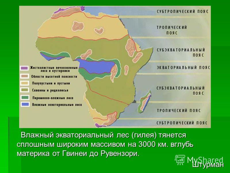 Влажный экваториальный лес (гилея) тянется сплошным широким массивом на 3000 км. вглубь материка от Гвинеи до Рувензори. Влажный экваториальный лес (гилея) тянется сплошным широким массивом на 3000 км. вглубь материка от Гвинеи до Рувензори.Штурман