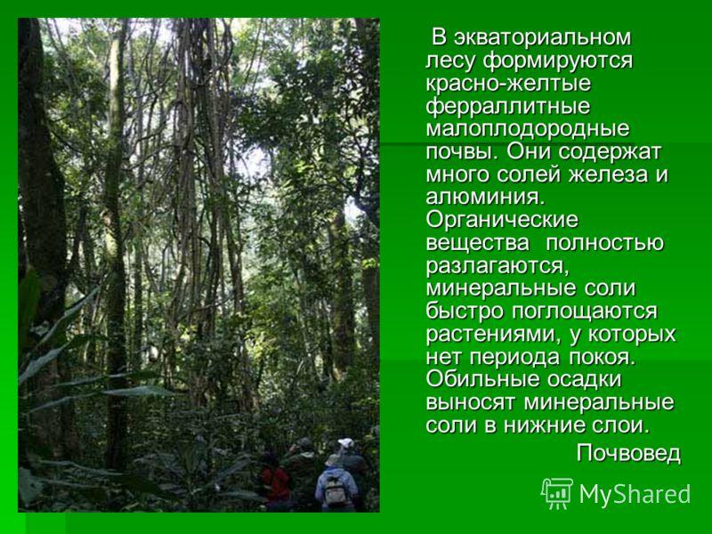 В экваториальном лесу формируются красно-желтые ферраллитные малоплодородные почвы. Они содержат много солей железа и алюминия. Органические вещества полностью разлагаются, минеральные соли быстро поглощаются растениями, у которых нет периода покоя.
