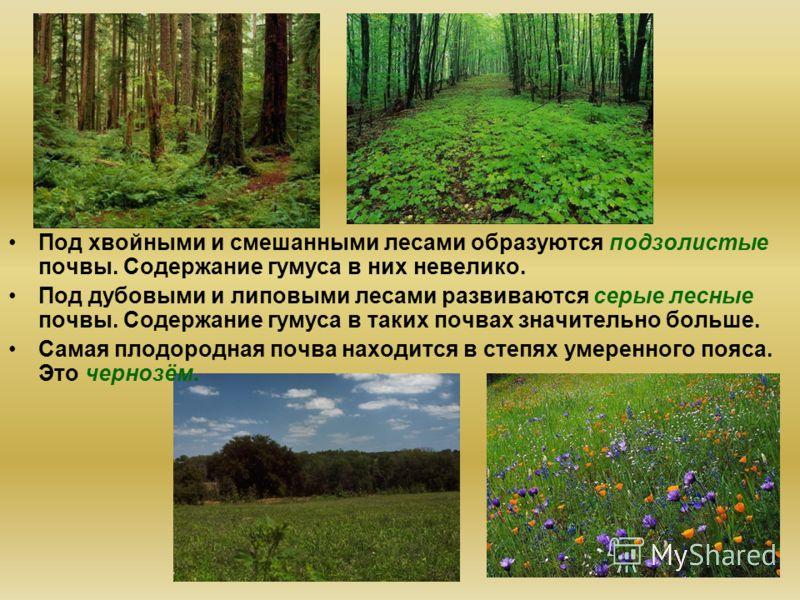 Под хвойными и смешанными лесами образуются подзолистые почвы. Содержание гумуса в них невелико. Под дубовыми и липовыми лесами развиваются серые лесные почвы. Содержание гумуса в таких почвах значительно больше. Самая плодородная почва находится в с