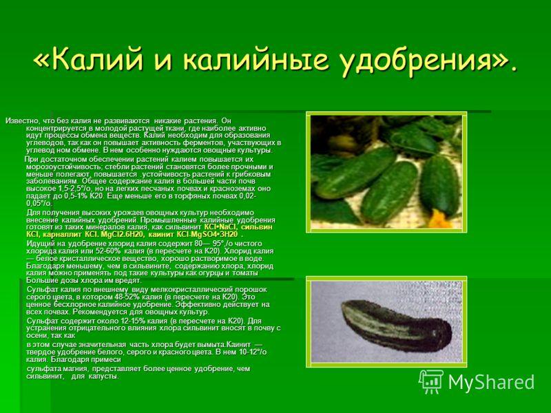 «Калий и калийные удобрения». Известно, что без калия не развиваются никакие растения. Он концентрируется в молодой растущей ткани, где наиболее активно идут процессы обмена веществ. Калий необходим для образования углеводов, так как он повышает акт