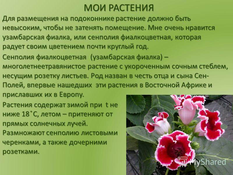 Для размещения на подоконнике растение должно быть невысоким, чтобы не затенять помещение. Мне очень нравится узамбарская фиалка, или сенполия фиалкоцветная, которая радует своим цветением почти круглый год. МОИ РАСТЕНИЯ Сенполия фиалкоцветная (узамб