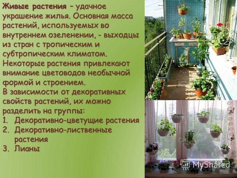 Живые растения – удачное украшение жилья. Основная масса растений, используемых во внутреннем озеленении, - выходцы из стран с тропическим и субтропич