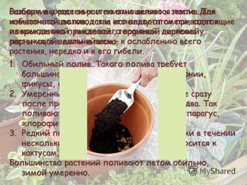 Разборчивы растения и по отношению к земле. Для комнатного цветоводства используют смеси, состоящие из компостной, листовой, торфяной, дерновой парниковой земли и песка. Важным в уходе за растениями является полив. Как избыточный полив, так и его нед