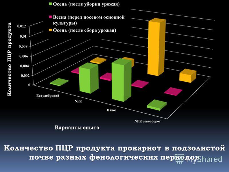 Количество ПЦР продукта прокариот в подзолистой почве разных фенологических периодов