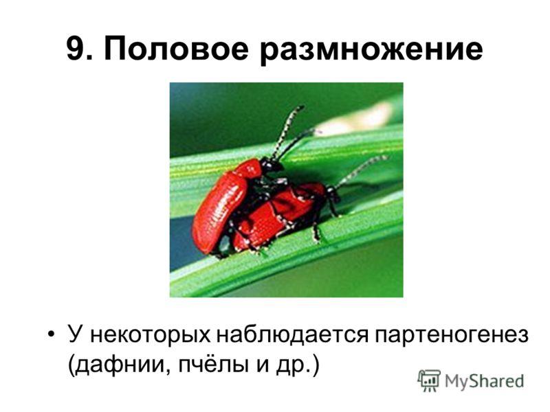 9. Половое размножение У некоторых наблюдается партеногенез (дафнии, пчёлы и др.)