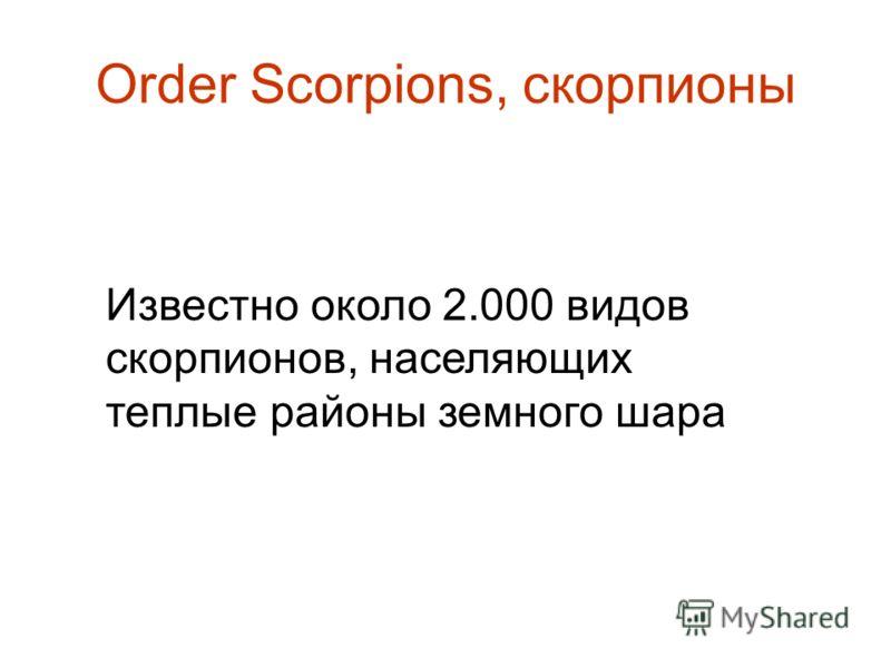 Order Scorpions, скорпионы Известно около 2.000 видов скорпионов, населяющих теплые районы земного шара