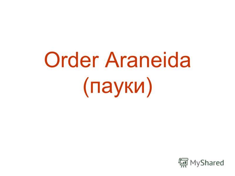 Order Araneida (пауки)