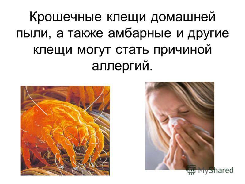 Крошечные клещи домашней пыли, а также амбарные и другие клещи могут стать причиной аллергий.