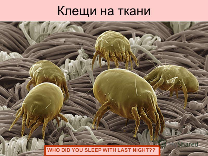 Клещи на ткани WHO DID YOU SLEEP WITH LAST NIGHT??