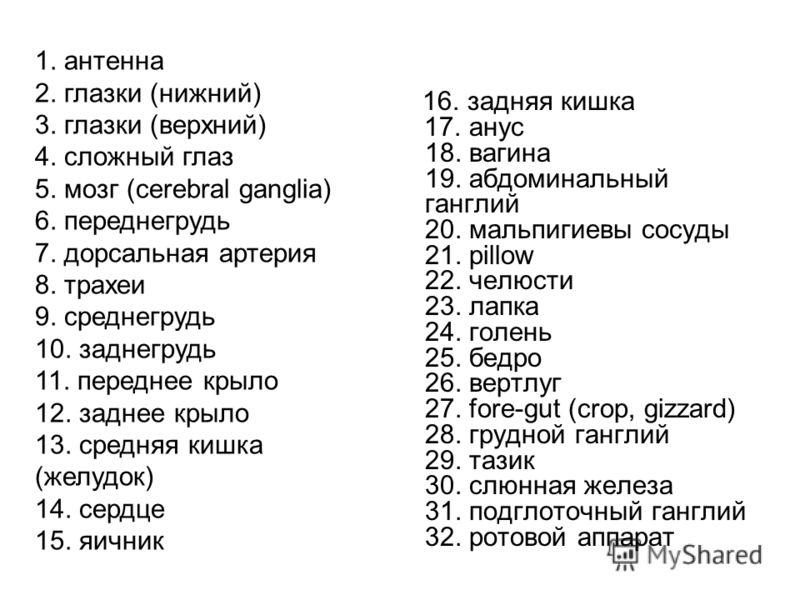 1. антенна 2. глазки (нижний) 3. глазки (верхний) 4. сложный глаз 5. мозг (cerebral ganglia) 6. переднегрудь 7. дорсальная артерия 8. трахеи 9. среднегрудь 10. заднегрудь 11. переднее крыло 12. заднее крыло 13. средняя кишка (желудок) 14. сердце 15.