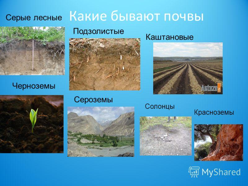 Какие бывают почвы Серые лесные Черноземы Подзолистые Солонцы Каштановые Красноземы Сероземы