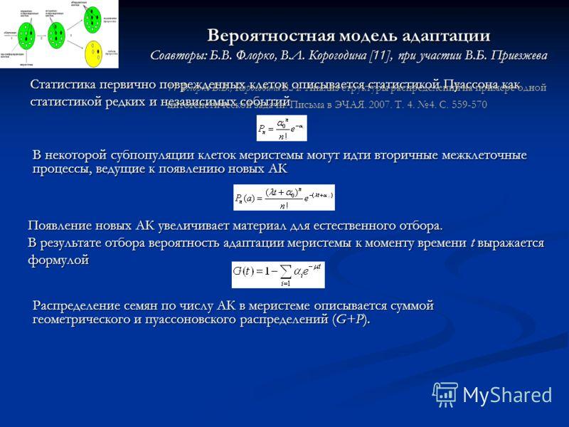 Вероятностная модель адаптации Соавторы: Б.В. Флорко, В.Л. Корогодина [11], при участии В.Б. Приезжева Распределение семян по числу АК в меристеме описывается суммой геометрического и пуассоновского распределений (G+P). Появление новых АК увеличивает
