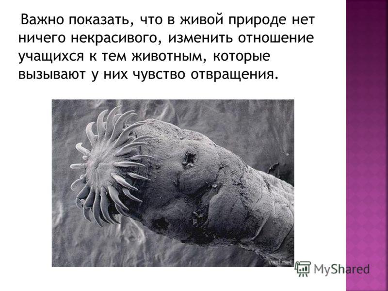 Важно показать, что в живой природе нет ничего некрасивого, изменить отношение учащихся к тем животным, которые вызывают у них чувство отвращения.