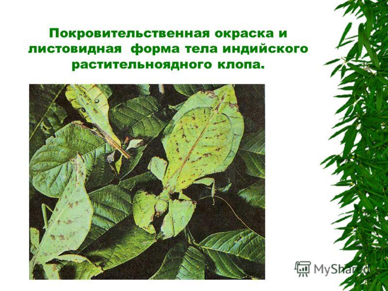 Покровительственная окраска скрывает бабочку на фоне окружающей среды.