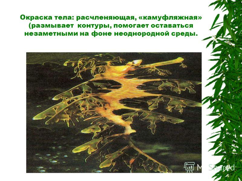 Карточка 1 В Южной Америке обитает 10 видов ленивцев - строго древесных животных. Нормальное положение тела этих животных - висячее, спиной вниз. В противоположность всем остальным млекопитающим, мех ленивцев на туловище растет от брюха к спине. На р