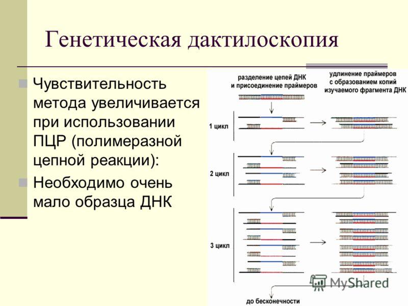 Генетическая дактилоскопия Чувствительность метода увеличивается при использовании ПЦР (полимеразной цепной реакции): Необходимо очень мало образца ДНК