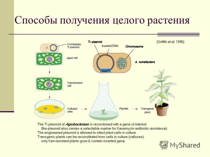 Способы получения целого растения