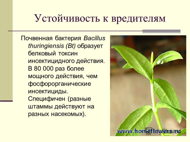 Устойчивость к вредителям Почвенная бактерия Bacillus thuringiensis (Bt) образует белковый токсин инсектицидного действия. В 80 000 раз более мощного действия, чем фосфорорганические инсектициды. Специфичен (разные штаммы действуют на разных насекомы