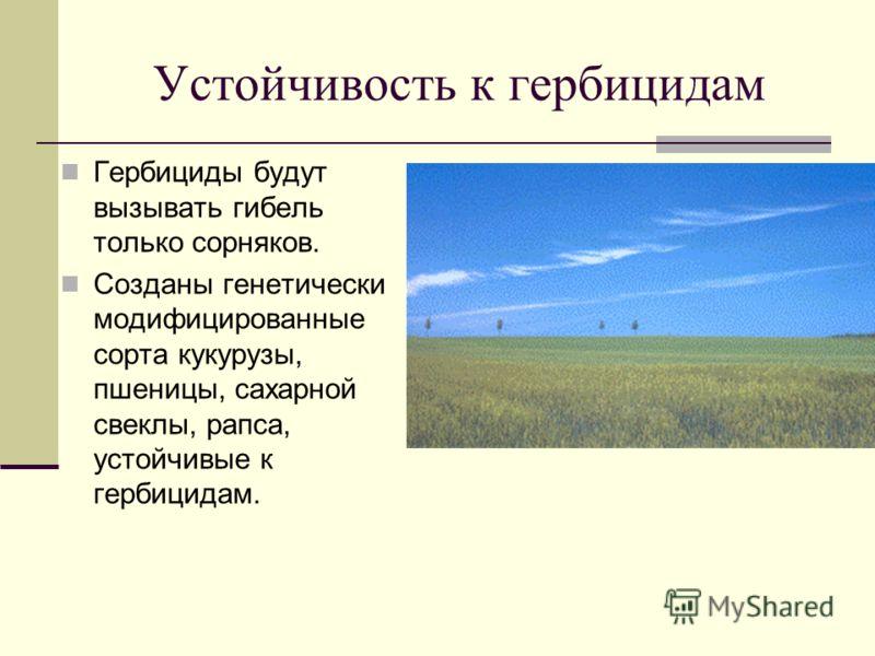 Устойчивость к гербицидам Гербициды будут вызывать гибель только сорняков. Созданы генетически модифицированные сорта кукурузы, пшеницы, сахарной свеклы, рапса, устойчивые к гербицидам.