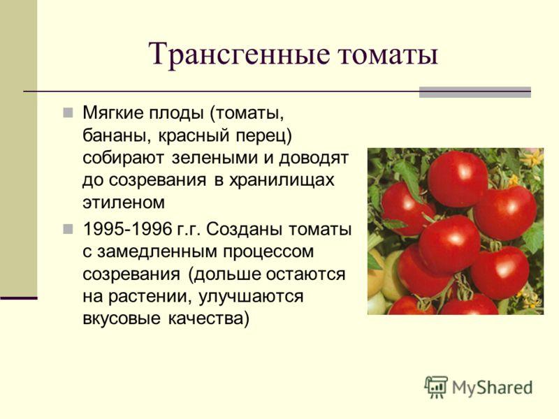 Трансгенные томаты Мягкие плоды (томаты, бананы, красный перец) собирают зелеными и доводят до созревания в хранилищах этиленом 1995-1996 г.г. Созданы томаты с замедленным процессом созревания (дольше остаются на растении, улучшаются вкусовые качеств