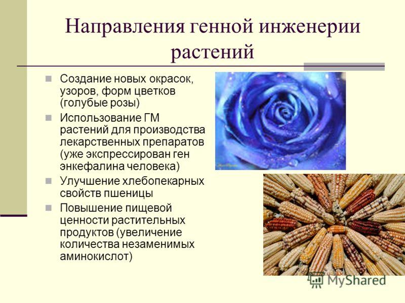 Направления генной инженерии растений Создание новых окрасок, узоров, форм цветков (голубые розы) Использование ГМ растений для производства лекарственных препаратов (уже экспрессирован ген энкефалина человека) Улучшение хлебопекарных свойств пшеницы