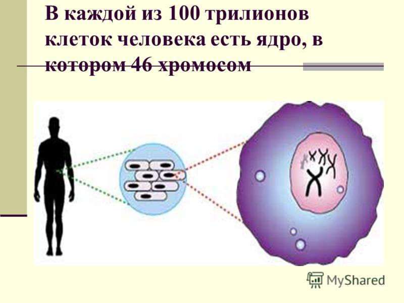 В каждой из 100 трилионов клеток человека есть ядро, в котором 46 хромосом