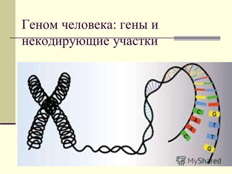 Геном человека: гены и некодирующие участки
