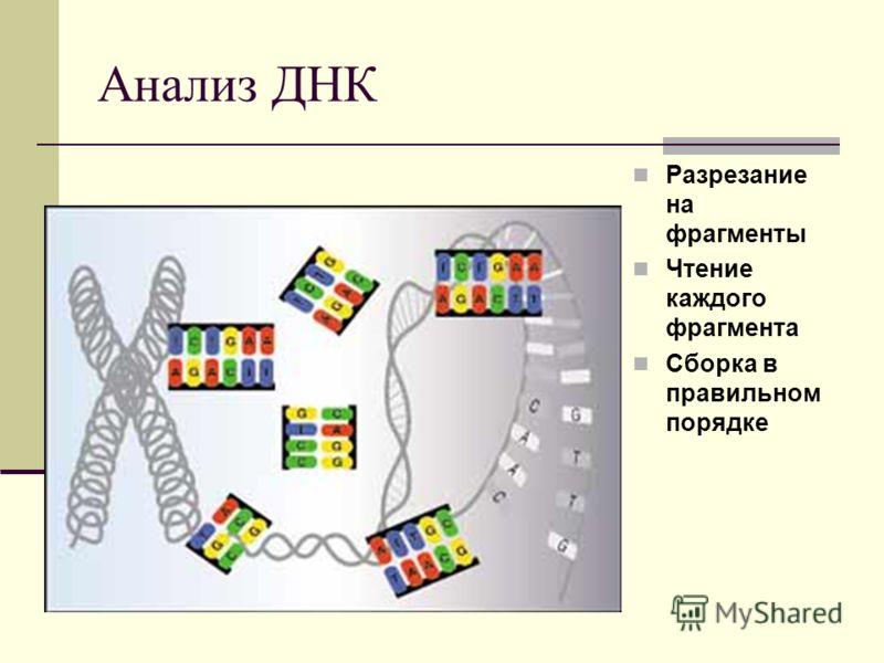 Анализ ДНК Разрезание на фрагменты Чтение каждого фрагмента Сборка в правильном порядке