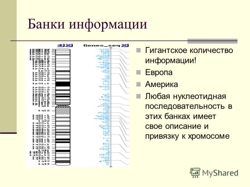 Банки информации Гигантское количество информации! Европа Америка Любая нуклеотидная последовательность в этих банках имеет свое описание и привязку к хромосоме