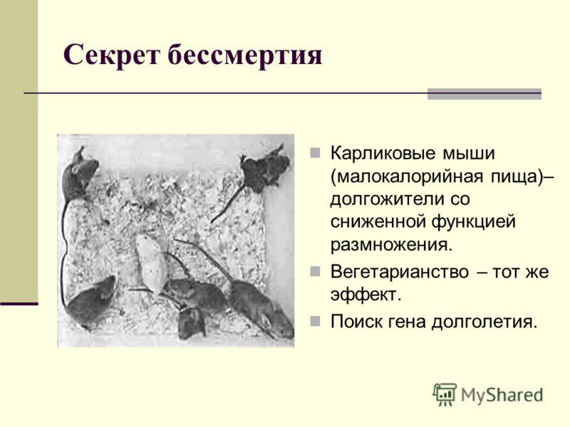Секрет бессмертия Карликовые мыши (малокалорийная пища)– долгожители со сниженной функцией размножения. Вегетарианство – тот же эффект. Поиск гена долголетия.