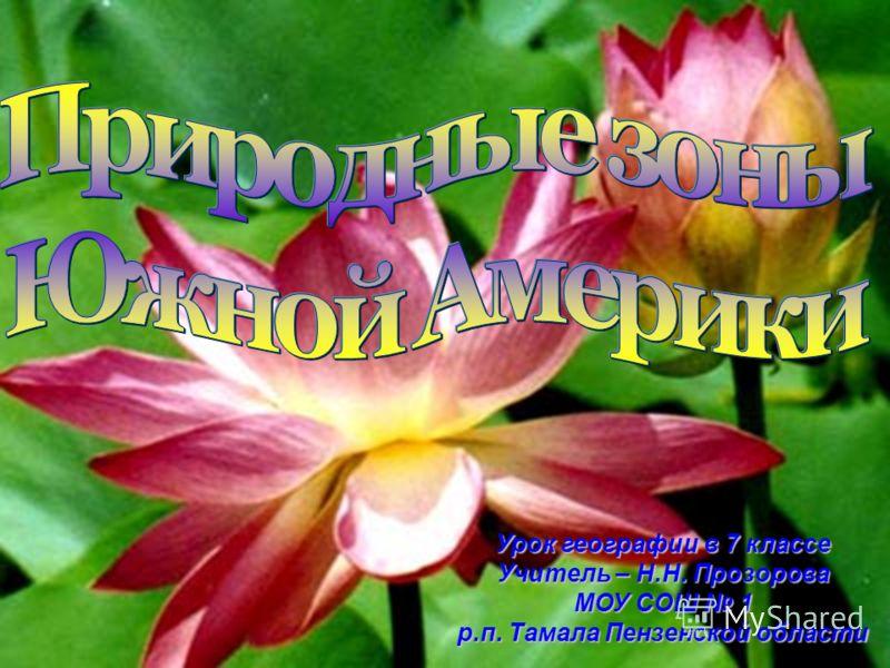 Урок географии в 7 классе Учитель – Н.Н. Прозорова МОУ СОШ 1 р.п. Тамала Пензенской области