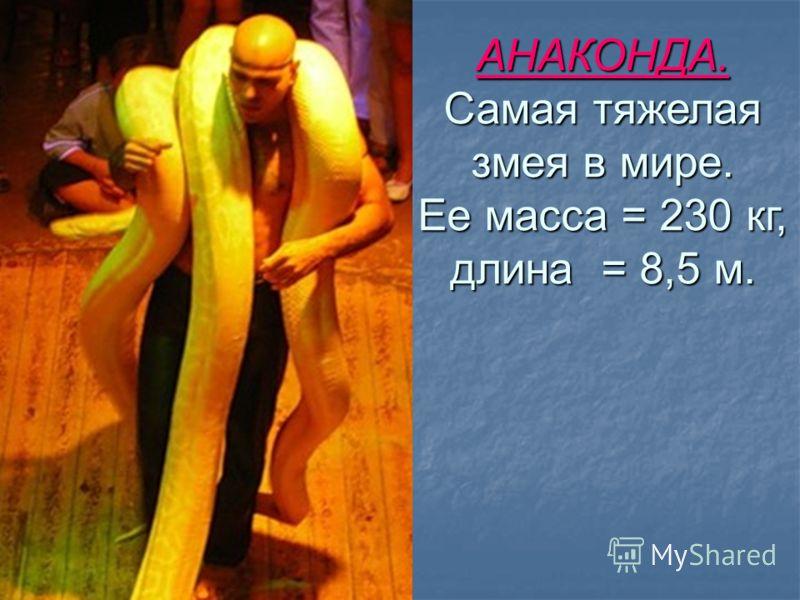 АНАКОНДА. Самая тяжелая змея в мире. Ее масса = 230 кг, длина = 8,5 м.