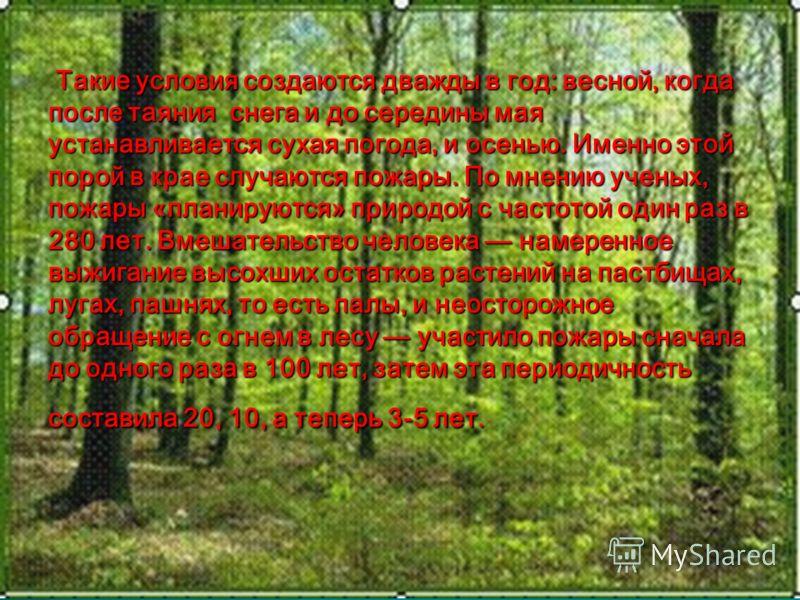 Такие условия создаются дважды в год: весной, когда после таяния снега и до середины мая устанавливается сухая погода, и осенью. Именно этой порой в крае случаются пожары. По мнению ученых, пожары «планируются» природой с частотой один раз в 280 лет.