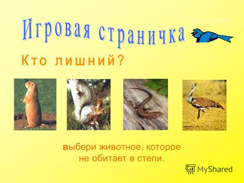 выбери животное, которое не обитает в степи.
