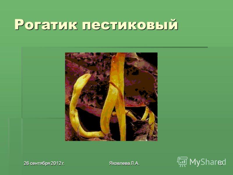 26 сентября 2012 г.26 сентября 2012 г.26 сентября 2012 г.26 сентября 2012 г.Яковлева Л.А.10 Рогатик пестиковый