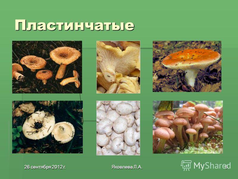 26 сентября 2012 г.26 сентября 2012 г.26 сентября 2012 г.26 сентября 2012 г.Яковлева Л.А.6 Пластинчатые