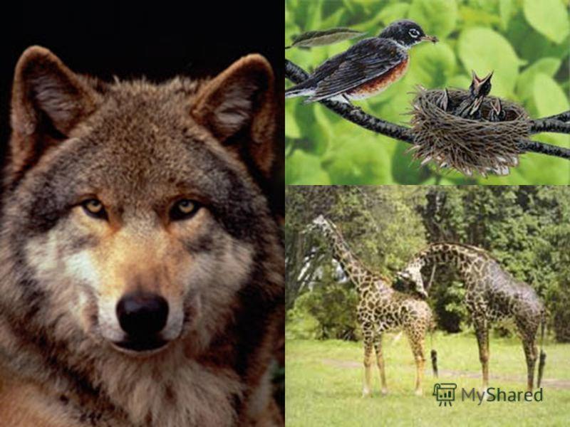Картинки с видами растений и животных Картинки с видами растений и животных
