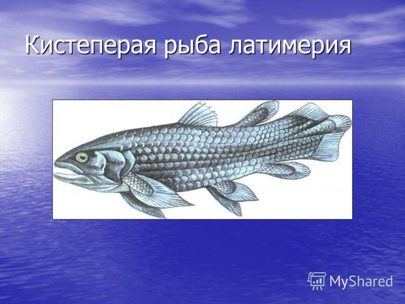 Кистеперая рыба латимерия