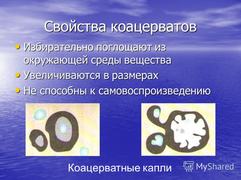 Свойства коацерватов Избирательно поглощают из окружающей среды вещества Избирательно поглощают из окружающей среды вещества Увеличиваются в размерах Увеличиваются в размерах Не способны к самовоспроизведению Не способны к самовоспроизведению Коацерв