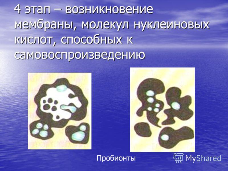 4 этап – возникновение мембраны, молекул нуклеиновых кислот, способных к самовоспроизведению Пробионты