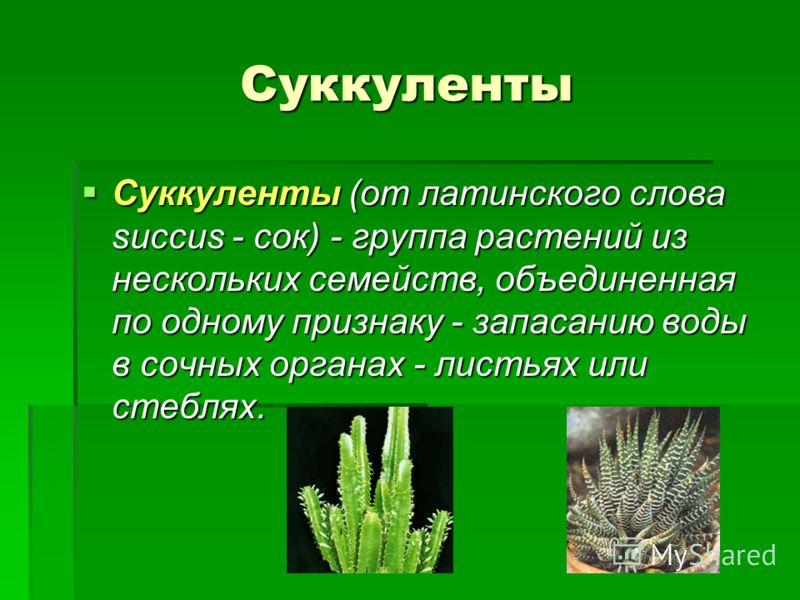 Суккуленты Суккуленты (от латинского слова succus - сок) - группа растений из нескольких семейств, объединенная по одному признаку - запасанию воды в сочных органах - листьях или стеблях.