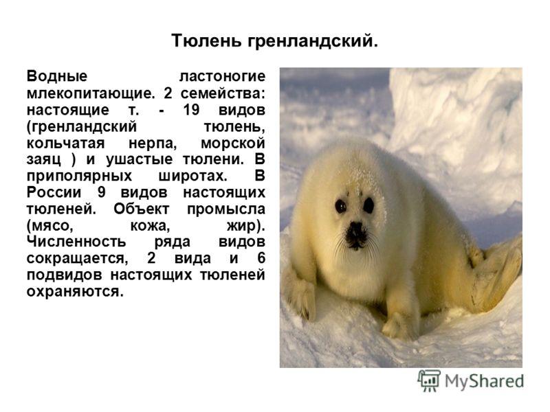 Тюлень гренландский. Водные ластоногие млекопитающие. 2 семейства: настоящие т. - 19 видов (гренландский тюлень, кольчатая нерпа, морской заяц ) и ушастые тюлени. В приполярных широтах. В России 9 видов настоящих тюленей. Объект промысла (мясо, кожа,