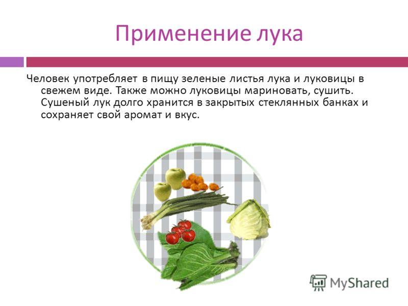 Применение лука Человек употребляет в пищу зеленые листья лука и луковицы в свежем виде. Также можно луковицы мариновать, сушить. Сушеный лук долго хранится в закрытых стеклянных банках и сохраняет свой аромат и вкус.